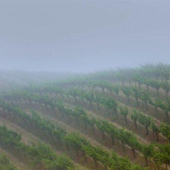 lumen-vineyards