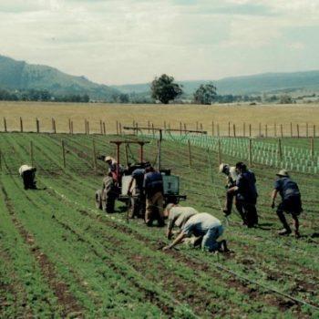 Planting26052016-600x396