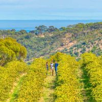 CH-vineyard-view-to-coast-w-winemakers